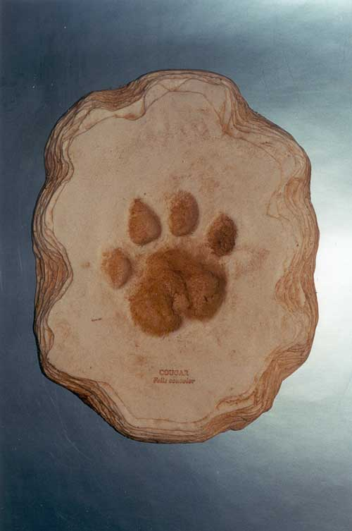Cougar footprint